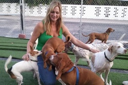 pet daycare in palm beach